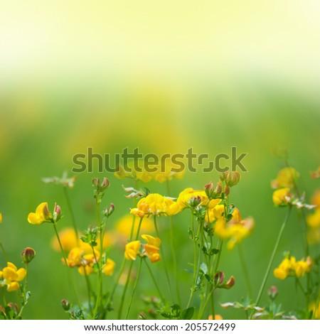 Field of gflowers. - stock photo