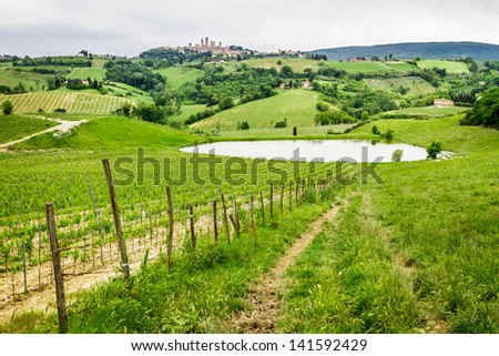 Field of grapes on a pond in Italy - stock photo