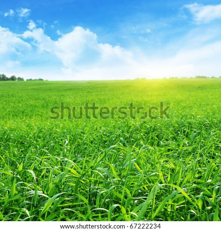 Field of grass  and blue sky with sun. - stock photo