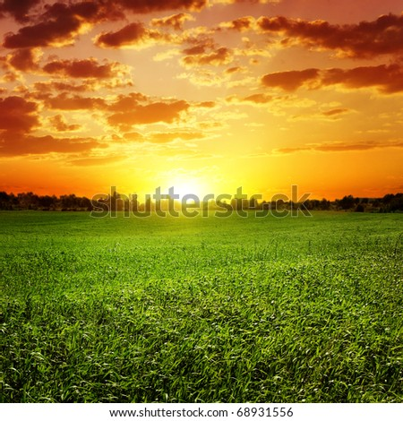 Field of grass and colorful sunset. - stock photo