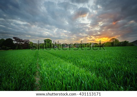 Field of grass and colorful sunset with lens vignetting - stock photo