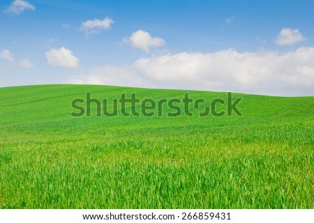 Field of grass and perfect blu sky in Val d'orcia - Tuscany - stock photo