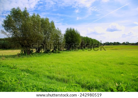 field of grass and perfect sky. spring landscape. spring meadow - stock photo