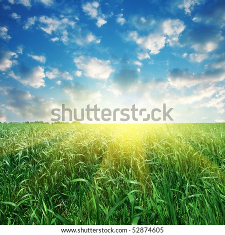 Field of grass and sun.