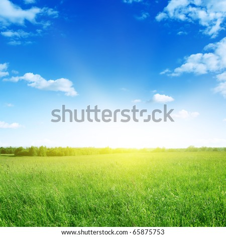 Field of grass and sun in blue sky. - stock photo