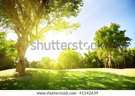 field of grass and trees - stock photo