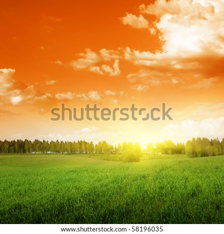 Field of grass and trees at sunset.