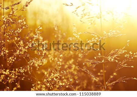 Field of grass at sunset - stock photo