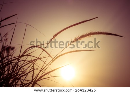 field of grass during sunset - stock photo