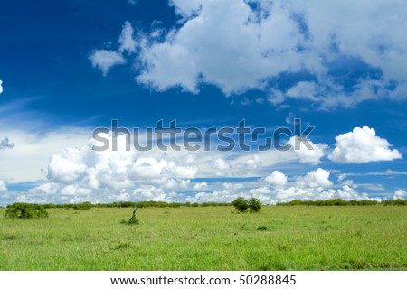 field of grass in africa and perfect sky - stock photo