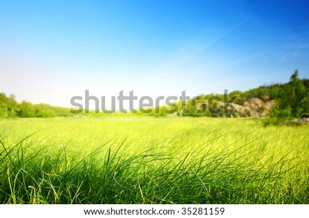 field of grass in north mountain (shallow DOF) - stock photo