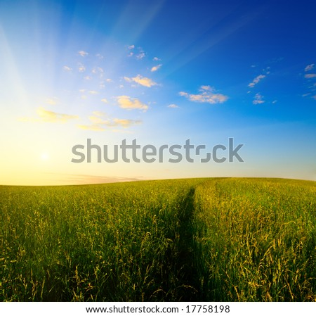 field of grass in time of sunset