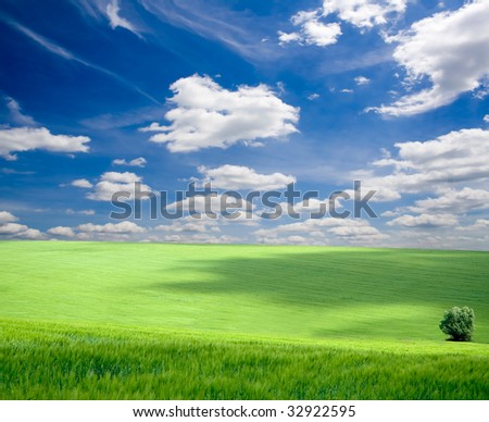 field of grass. meadow green under sky