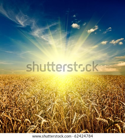 field of grass. meadow wheat under sky - stock photo