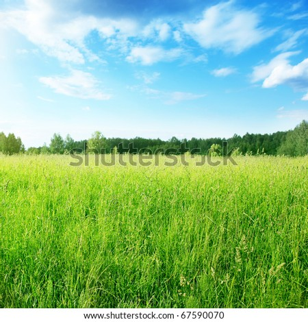 Field of grass on summer day. - stock photo
