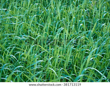 field of grass that make a green texture - stock photo