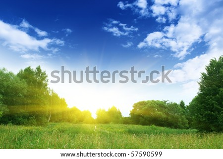 Field of grass,trees,blue sky and sun.