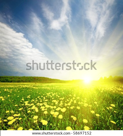 field of grass with dandelion on background distant wood in sunset - stock photo
