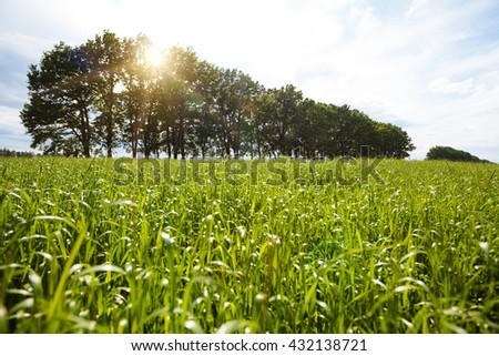 Field of grass with sky - stock photo