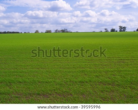 Field of green ascending wheat against the blue sky and clouds - stock photo