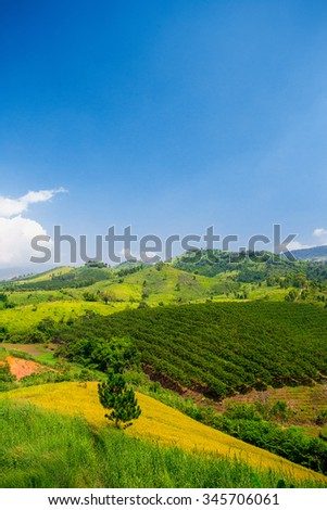 Field of green forest and perfect blue sky, Vertical