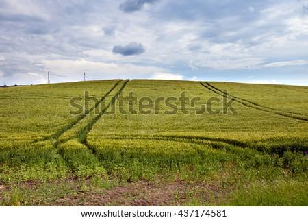 Field of green fresh grass under blue sky   - stock photo