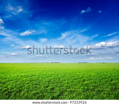Field of green fresh grass under blue sky - stock photo