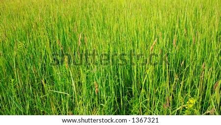 field of green grass - stock photo