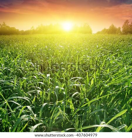 Field of green grass and beautiful sunset. - stock photo