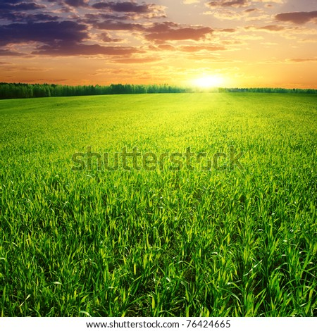 Field of green grass and beautiful sunset. - stock photo
