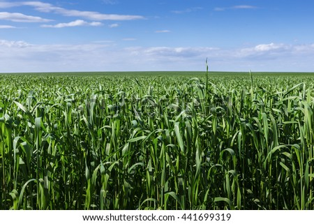field of green grass and blue sky - stock photo