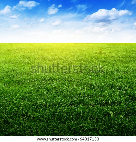 Field of green grass and blue sky. - stock photo