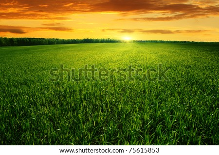 Field of green grass and bright sunset. - stock photo