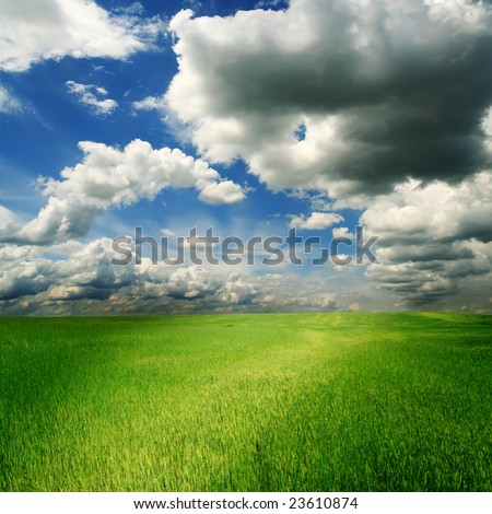 field of green grass and cloudy sky