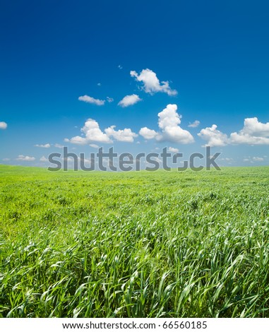 field of green grass and deep blue sky with clouds - stock photo