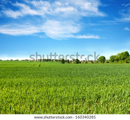 Field of green grass and perfect blue sky  - stock photo