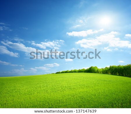 Field of green grass and perfect sky and trees