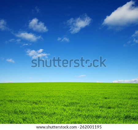field of green grass and sky - stock photo