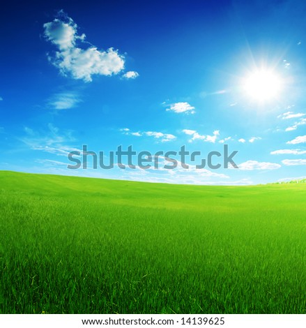 field of green grass and sun blue sky - stock photo