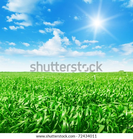 Field of green grass and sun in blue sky. - stock photo