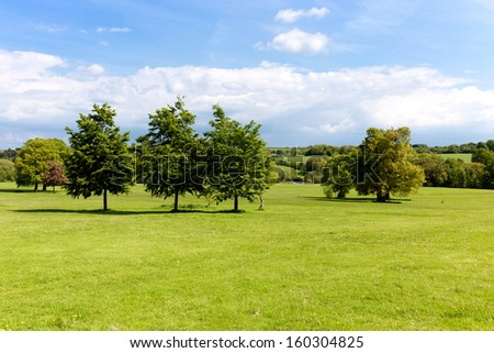 Field of green grass and tree - stock photo