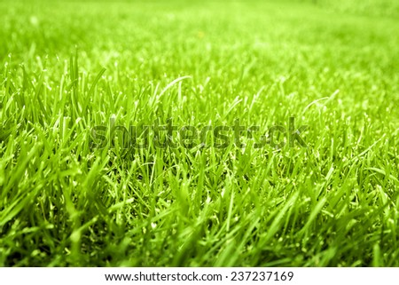 field of green grass in summer. - stock photo