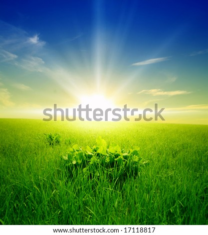 field of green grass on a background a sunrise - stock photo