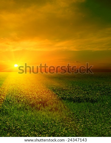 field of green grass on a background a sunset