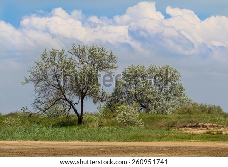 Field of green grass,trees and blue sky - stock photo