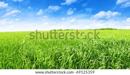 Field of green grass under blue sky. - stock photo
