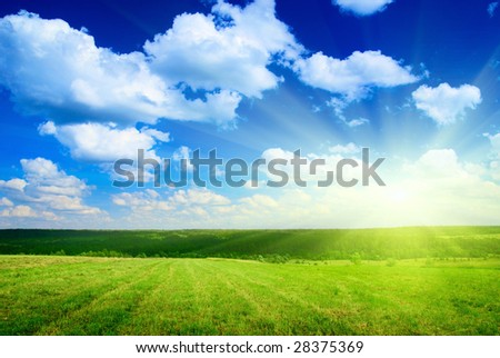 field of harvested grass