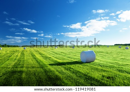 field of harvested grass, north of Russia - stock photo