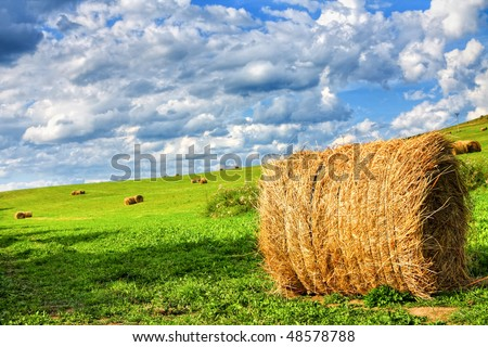 Field of hay bales - stock photo
