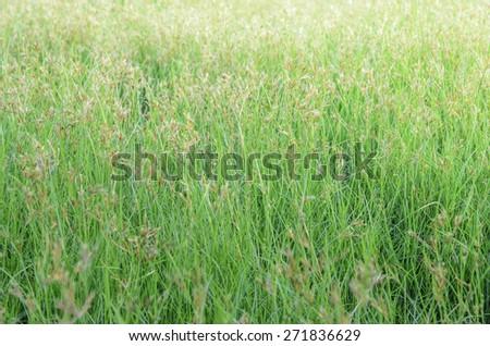 Field of light - stock photo